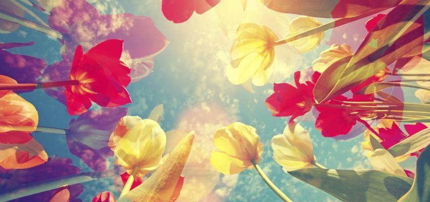 Descubre cuál es el significado de las flores