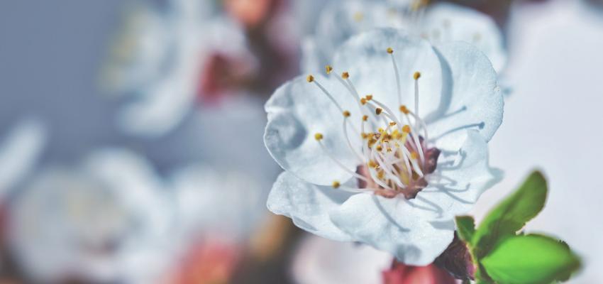 Aromaterapia con Flores de Bach, conozca sus poderes combinados
