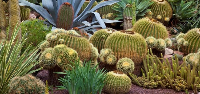 Cactus, protección y seguridad para tu hogar