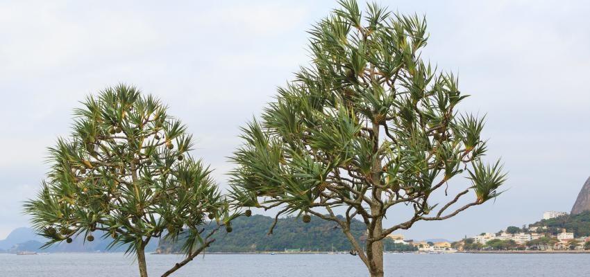 Xilomancia y el poder de examinar los árboles