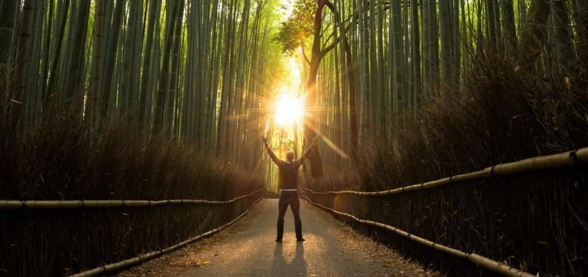 Magia natural y el poder de la naturaleza cómo fuente de poder y sabiduría