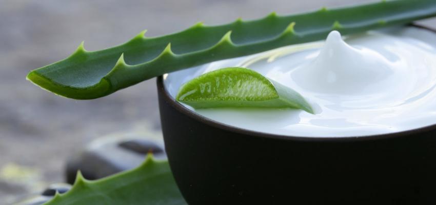Aloe vera: beneficios medicinales, cosméticos y mágicos