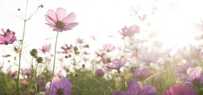Horóscopo de las flores, una flor para cada signo del zodíaco