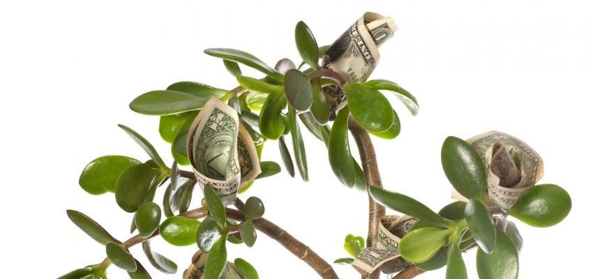 Árbol de billetes: ¿Sabes cual es su significado?