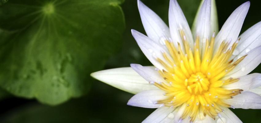 Los doshas en ayurveda: Conoce cómo ellos influyen en nuestra vida