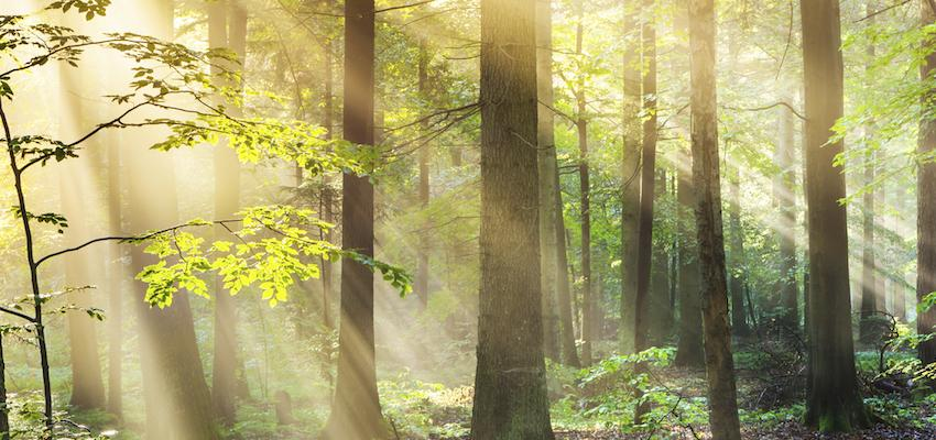 Elementales, la magia de los espíritus puros de la Naturaleza