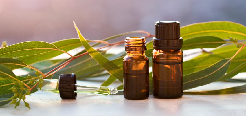 Beneficios del eucalipto: descúbrelos y úsalos