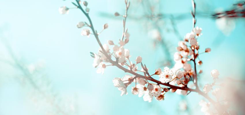 Flores de bach para adelgazar. Conoce las que te pueden ayudar.