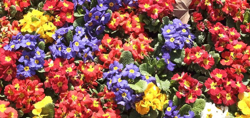 Las flores de los signos: el aroma que les distingue