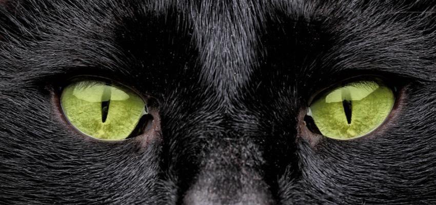 Hechizo del gato negro en el Halloween