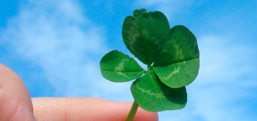 Trébol de cuatro hojas para traer suerte a su vida