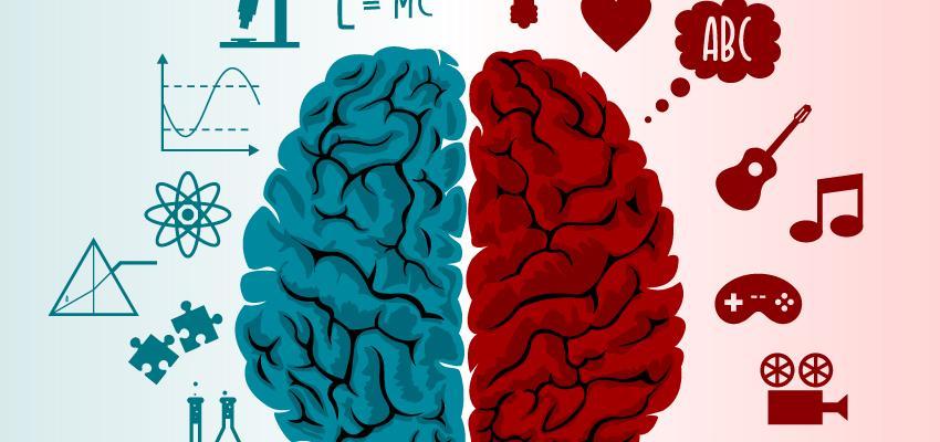 Los hemisferios cerebrales y la personalidad