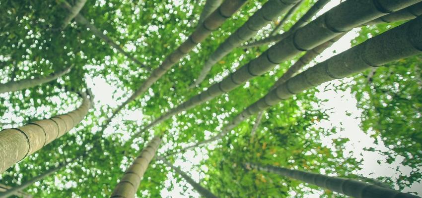 Huldra: la guardiana de los bosques escandinavos