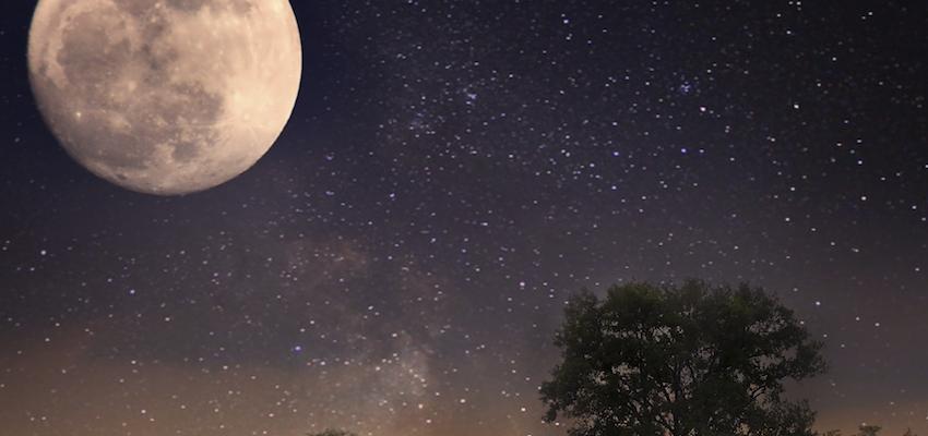 Cómo es la Influencia de la luna en las plantas