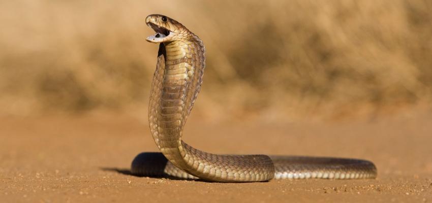 Horóscopo Maya: la sensualidad de la serpiente
