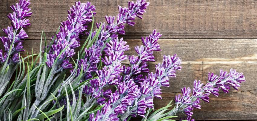 Beneficios de la lavanda en aromaterapia