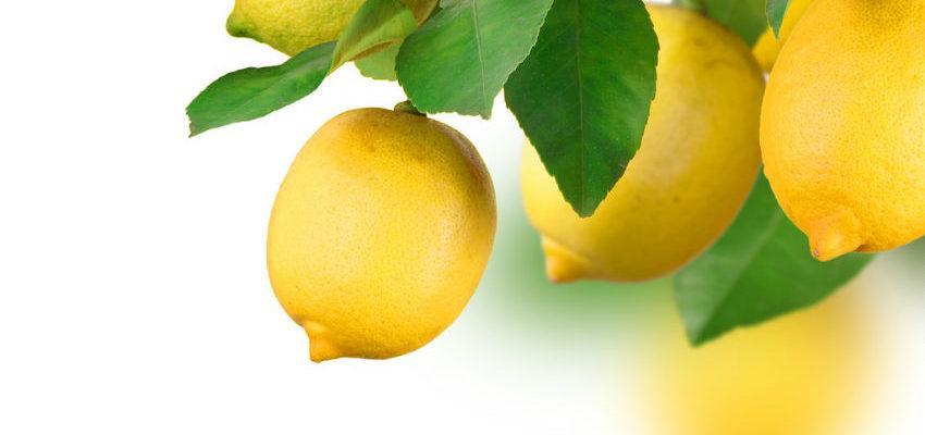 Rituales con limón para atraer el amor a tu vida