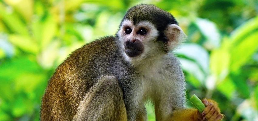 Horóscopo Maya: el buen humor del mono