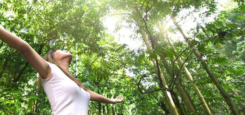 Palo Santo: el aroma de la naturaleza
