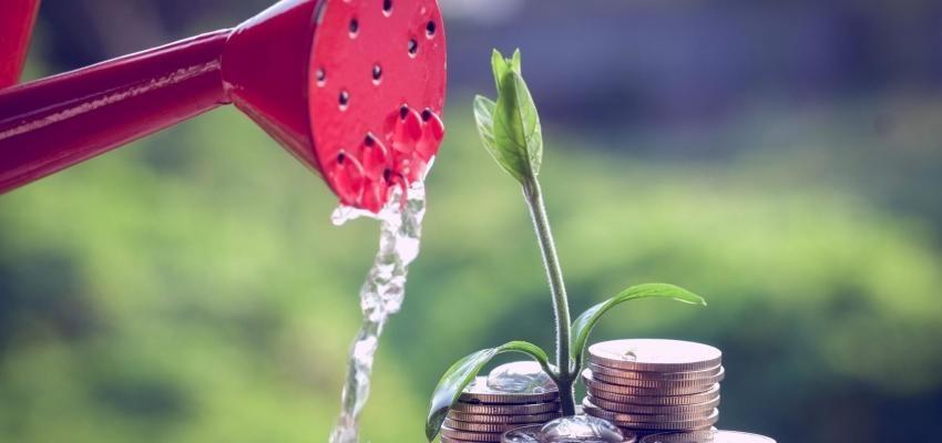 Planta del dólar: hechizos para atraer el dinero