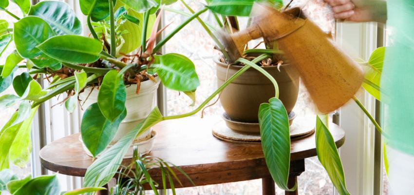 Conoce las plantas para atraer prosperidad en tu negocio