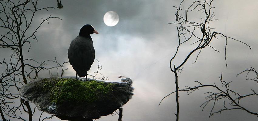 Rituales de protección de la magia negra