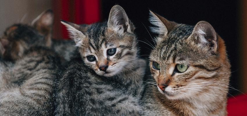 Soñar con gatos: afine los sentidos