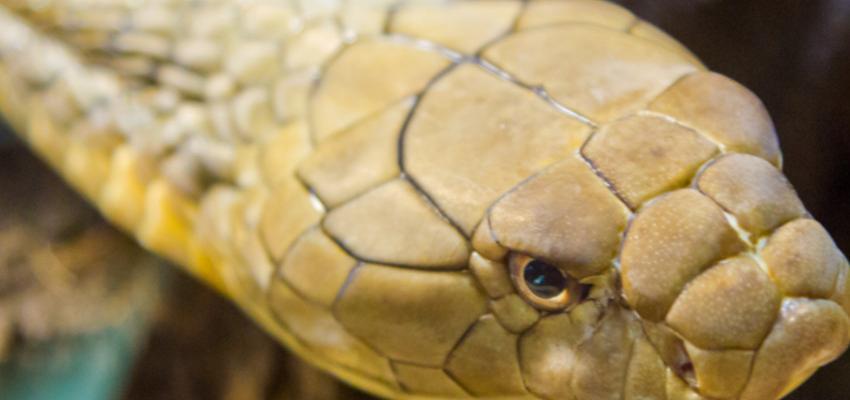 Soñar con serpientes: graves peligros a tu alrededor