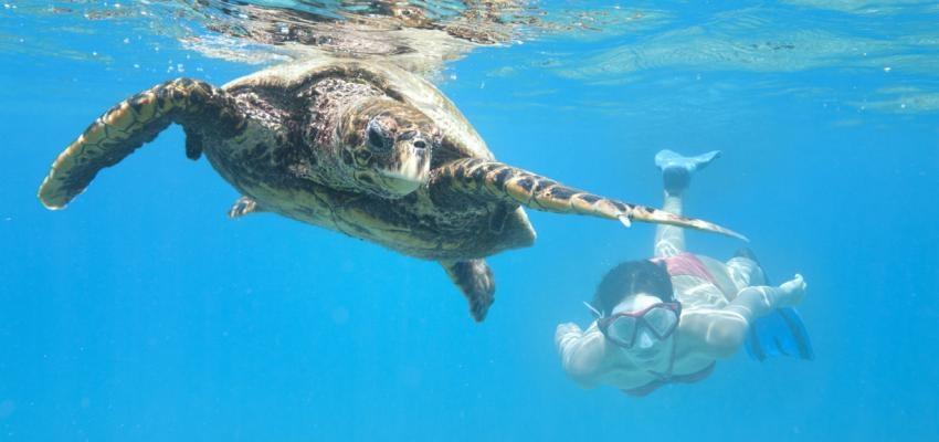 Horóscopo Maya: la lealtad de la tortuga