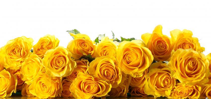 Ritual de la rosa amarilla para atraer prosperidad