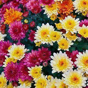 plantas para la energía positiva en el hogar