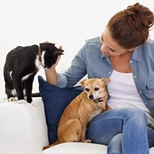 reencarnación en animales
