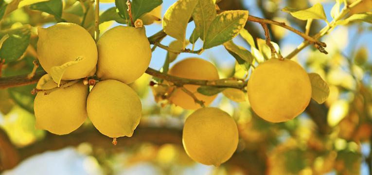 Amuletos con limones para el hogar