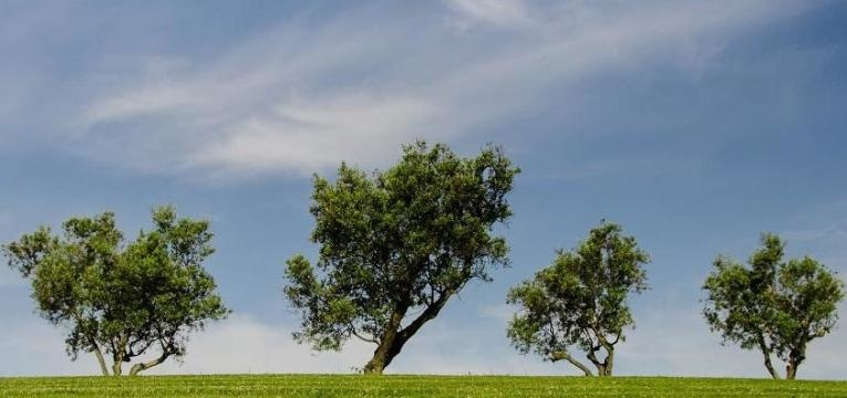 sanación del árbol genealógico