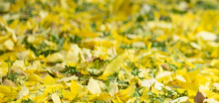 El Arcángel Jophiel y el color amarillo