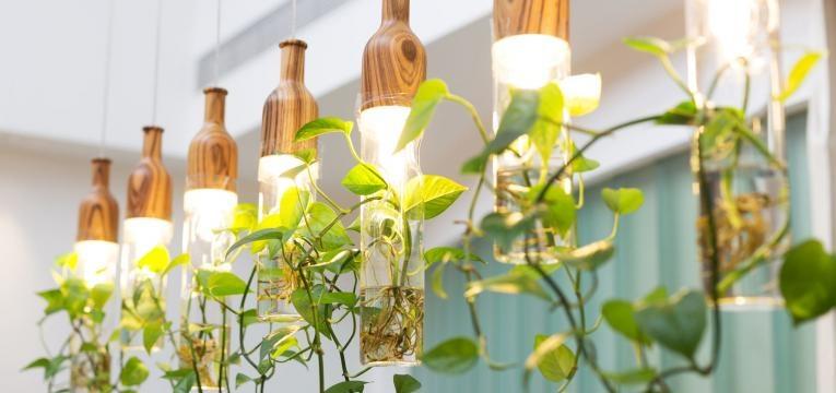 plantas protectoras del hogar