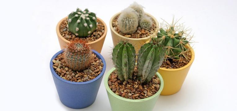 cactus y los espíritus
