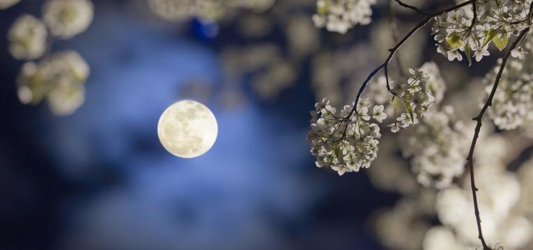 Características generales de los nativos con la luna en Cáncer