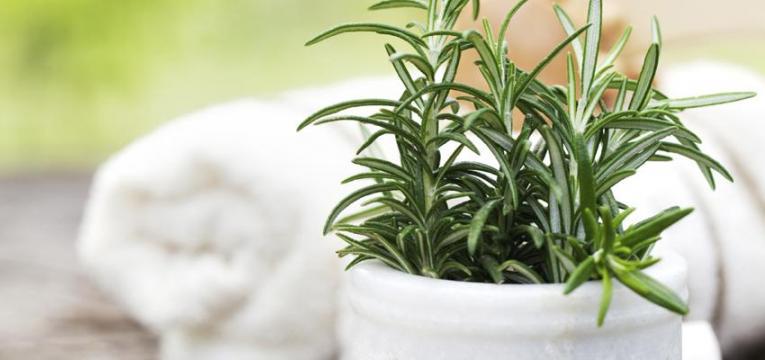 ¿Cómo erradicar la energía negativa con la limpieza del hogar con vinagre y ruda?