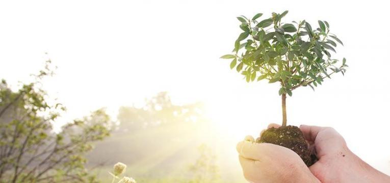Descubre cómo usar la magia verde para el amor