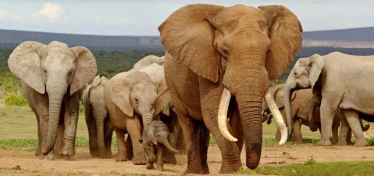 Elefantes como amuletos de la buena suerte, ¿cómo debe ser su trompa?