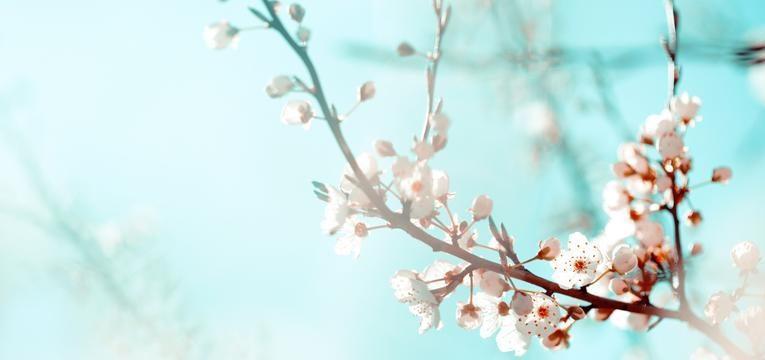 Aromaterapia con Flores de Bach: orígenes