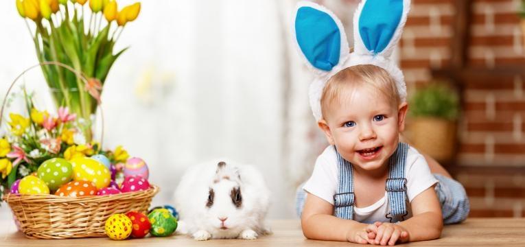 el conejo o gato