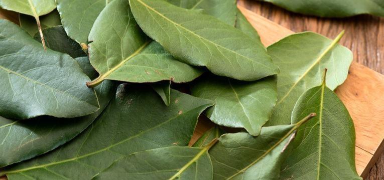 Beneficios medicinales de la hoja de laurel
