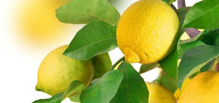 4 remedios naturales con limón