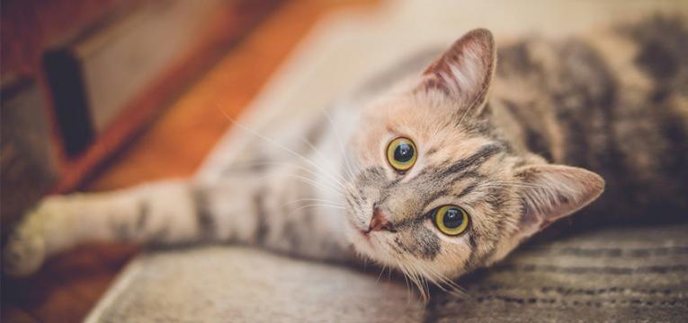 Terapia con gatos, los perfectos acompañantes