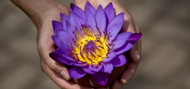Significado de la flor de loto según su color