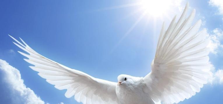 plumas de los ángeles