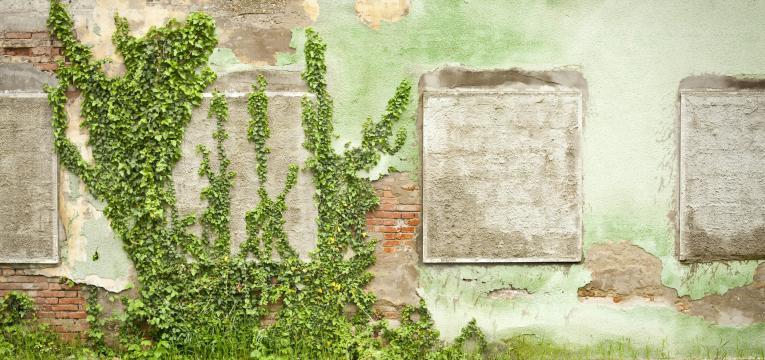 Plantas negativas para el hogar: Enredadera