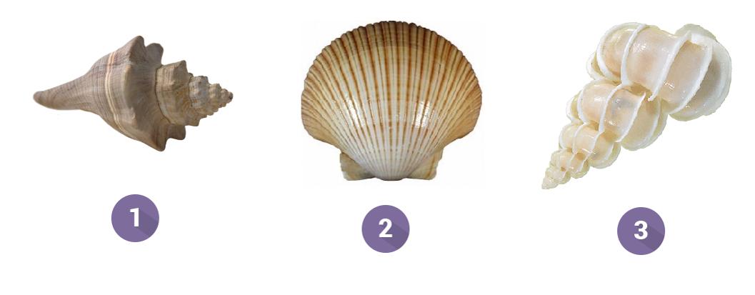 test de personalidad de las tres conchas